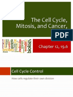 17 Cell Cycle, Mitosis, And Cancer Pt 2