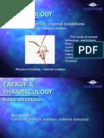 Animal Behavior & Stimulus Energy