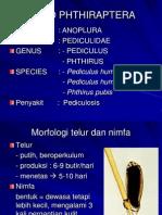 Ordo Phthiraptera
