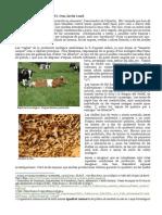 Alimentació sostenible (IV)
