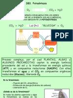 Bio Fotosintesis