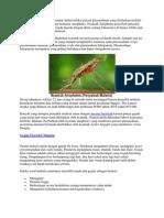 Malaria Adalah Penyakit Menular Akibat Infeksi Parasit Plasmodium Yang Ditularkan Melalui Gigitan Nyamuk Malaria Yang Bernama Anopheles