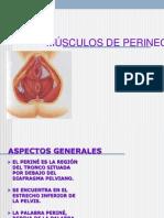 3.- MÚSCULOS PELVIS