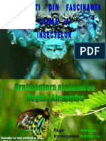 Curiozitati Din Fascinanta Lume a Insectelor