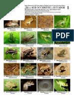 237 Anfibios y Reptiles SW Ecuador 04