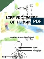 2 Life Processes