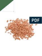 od zrna do kruha A5