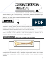 Sistema Esquelético e Articular