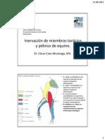 Inervacion miembros equino 003-2013 AV2-..pdf