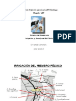 Irrig MbPelvico canino 005-for PDF.pdf