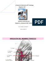 Irrig MbToracico canino 004 -for PDF___.pdf