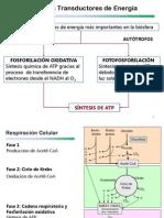 Biología I Tema 3.2.5.3 Cadena Respiratoria