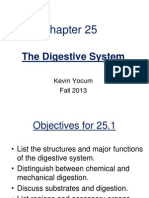 Kevin Yocum Digestive System 1