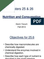 Kevin Yocum Digestive System 3