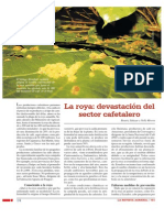 La Roya Devastacion Del Sector Cafetalero