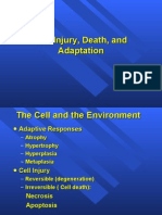 Cell Injury 1&2