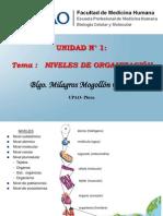 2. Niveles de Organizaci