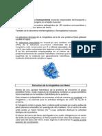 T4.mioglobina