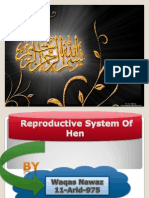 Reproductive System of Hen