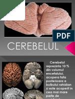 cerebelul