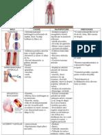 Boli Ale Sistemului Circulator La Om