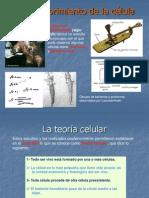 diapositivas celula