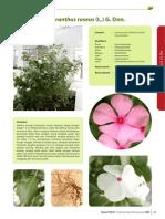Catharanthus roseus (L.) G. Don..pdf