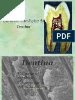 Complexo Dentina Polpa