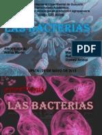 Las Bacterias Exposicion