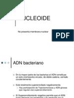 Nucleoid e