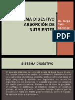 4.2.- Fisiología Digestiva y Absorción de Nutrientes en el Deportista. Dr Tello Sánchez