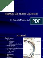 6-Palpebra .PPTIndon Version