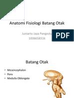 Anatomi Fisiologi Batang Otak