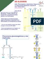 Tema 6- Gluconeogenesis (1).ppt