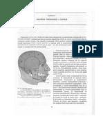 85050750 2 Anatomia Topografica a Capului