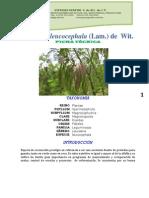 Ficha Tecnica Leucaena Leucocephala