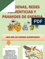 Diapositivas Cadena Alimenticia C.N