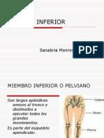 CLASE 6 Anato_M_Inf,Gluteo (1)