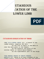 Lower Limb Inervation