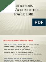 Lower Limb Inervation