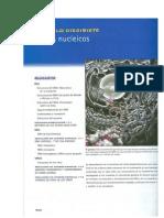 McKee y McKee 2003-Acidos Nucleicos