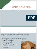 ANATOMIA DE LA PIEL1.pptx