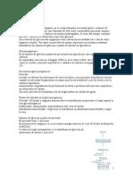 Tema 11. Gluconeogenesis
