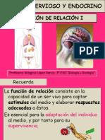 p 171 Sistema Nervioso Yen Doc Rino