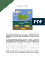 EL CICLO DEL NITRÓGENO y del carbono