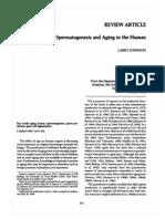 Aging Men Spermatogenesis