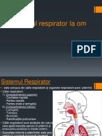 Sistemul Respirator La Om