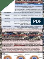 Tema 5 Invertebrados Acuaticos