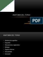 Torax_2011