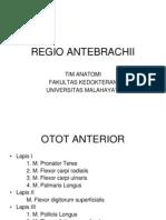 Regio Antebrachii Anatomi III